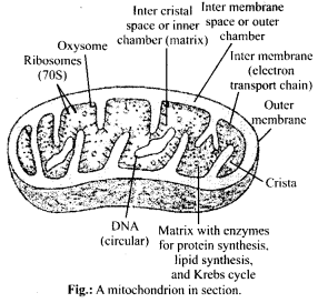 ncert-solutions-for-class-11-biology-cell-the-unit-of-life-1