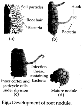 ncert-solutions-for-class-11-biology-mineral-nutrition-1