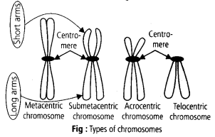 ncert-solutions-for-class-11-biology-cell-the-unit-of-life-5