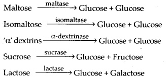 ncert-solutions-for-class-11-biology-digestion-and-absorption-8