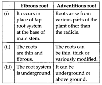 ncert-solutions-for-class-11-biology-morphology-of-flowering-plants-2