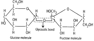 ncert-solutions-for-class-11-biology-biomolecules-1