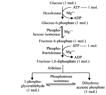 ncert-solutions-for-class-11-biology-respiration-in-plants-2-10