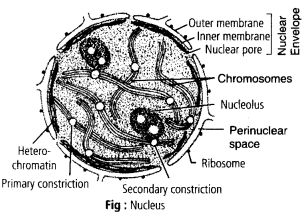 ncert-solutions-for-class-11-biology-cell-the-unit-of-life-3