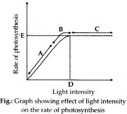 ncert-solutions-for-class-11-biology-photosynthesis-in-higher-plants-6